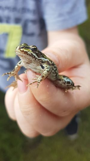 Frog Frosch Picoftheday Animal Human Hand Child Reptile Summer Tree Close-up
