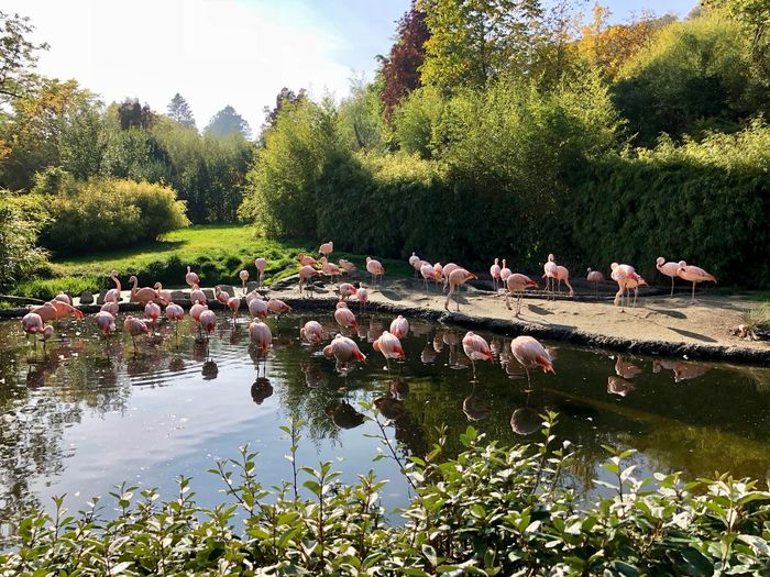Plant Bird Animals In The Wild Large Group Of Animals Lake Nature Day Flock Of Birds Reflection Flamingo Flamingos