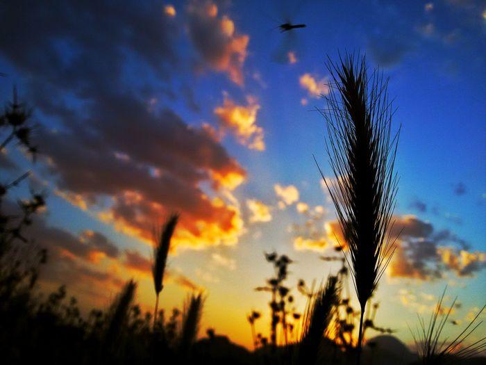 Sunset Sunshine Sunset_collection Iran Iran♥ Clouds And Sky Cluod گندم طبیعت ایران طبیعت ایران غروب_آفتاب غروب Iranpics Iranian_photography First Eyeem Photo