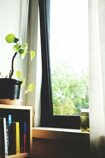 Rainy day with books & tea Window Plant Indoors tlneapelle Home Interior No People Bedroom Green Color Fragility Nature Tea Books Book Bookshelf Home Room Plants Read