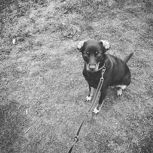 Dog Dogeyes Dogmodel Doginstagram Instadog Photodog Dogphoto Doginsta Pies Piesinst Bestdogmodel Majapies Maja Dogsofinstagram Dogstagram Blackdogsofig Ig_dogphot Doglife Doglifestyle Ig_dogphot Cutedog Dog_of_instagram Puppydog Littledog Dogins doginstragram 💙 Please follow follow me and comment 💙 dog dogeyes dogmodel doginstagram instadog photodog dogphoto doginsta pies piesinst bestdogmodel majapies maja dogsofinstagram dogstagram blackdogsofig ig_dogphot doglife doglifestyle ig_dogphot cutedog dog_of_instagram puppydog littledog dogins doginstragram animal animallovers animallover hstag amazingpicturez_animals