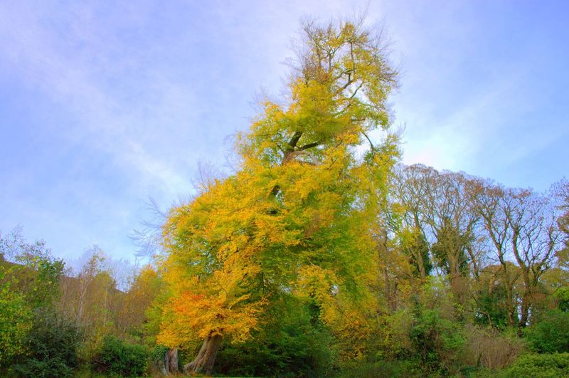 Tree Nature Growth Autumn Sky Beauty In Nature Tranquility Change Tranquil Scene Outdoors Scenics Day Forest No People Low Angle View Branch Grass Belfast Northern Ireland Beauty In Nature Eyeemphotography EyeEmBestEdits Eye4photography  Nature Tranquility
