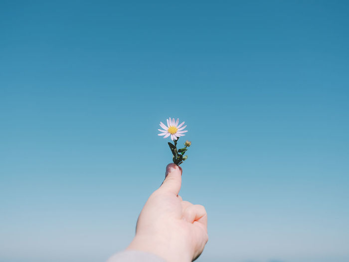 Hand holding flower against clear blue sky