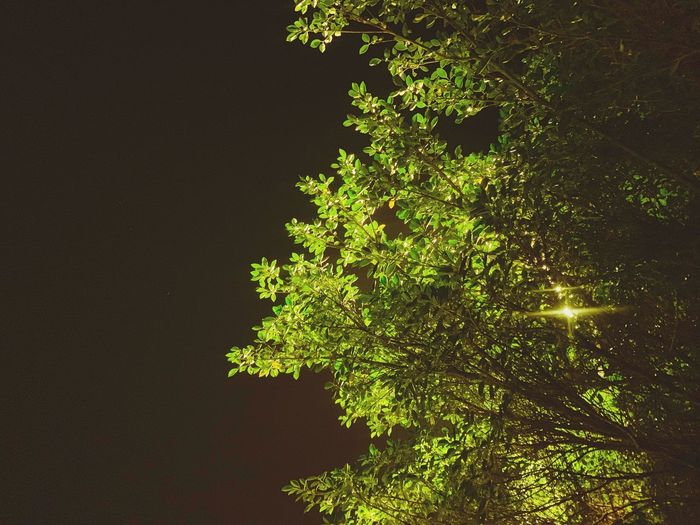 Plant Tree Growth Nature Low Angle View Beauty In Nature Branch Tree Trunk Leaf Green Color