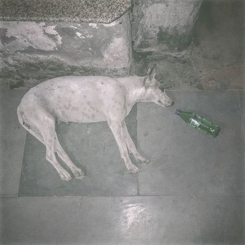"""Thug Life"" Stray Street Dog Cute Pet Animal Drink Drunk Thuglife Sprite Softdrink Bark Life Love Delhi India Photooftheday Picoftheday Bestoftheday"