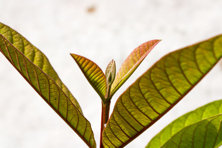 Close-up of leaves