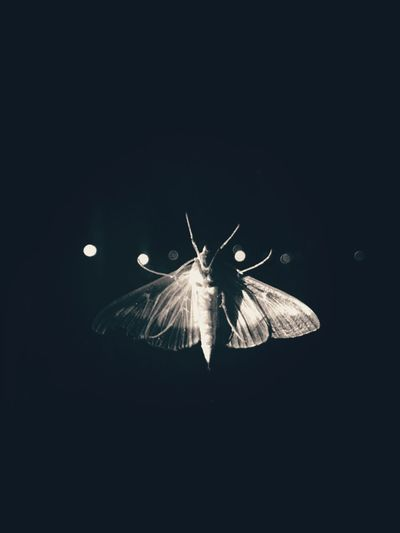 Animal Themes Dark Nature Life Light In The Darkness Darkness And Light Light And Shadow Moments Life Is Beautiful Butterfly Dark Night Monochrome Black & White Blackandwhite Black And White Shades Of Grey Vintage
