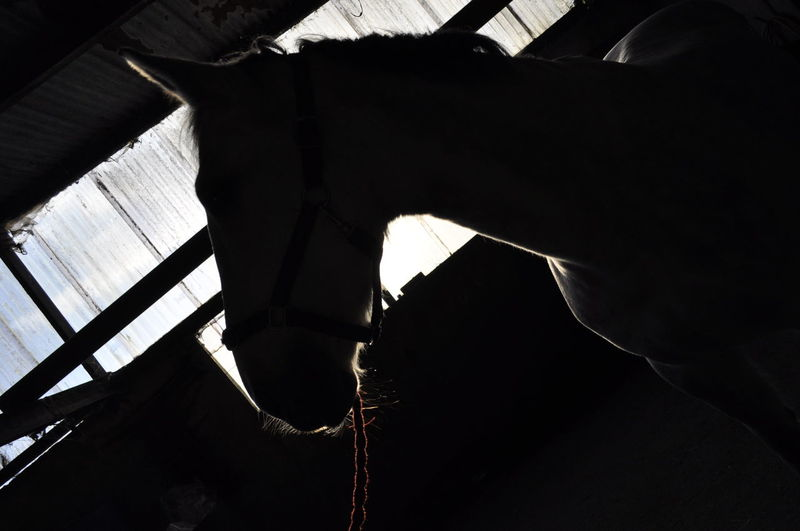 Horses Light Silhouette Yard Art Close-up Contrast Day Forlock Horse Human Body Part Human Hand Indoors  Lead Reign Mane One Person People Real People Sky Stables Yard Young Adult