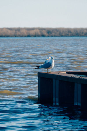Lachine Lachine Canal Montreal Seagulls Animal Themes Animal Wildlife Animals In The Wild Beauty In Nature Bird Canada Coast To Coast Close-up Day Nature No People One Animal Outdoors Perching Sea Seagull Water Waterfront
