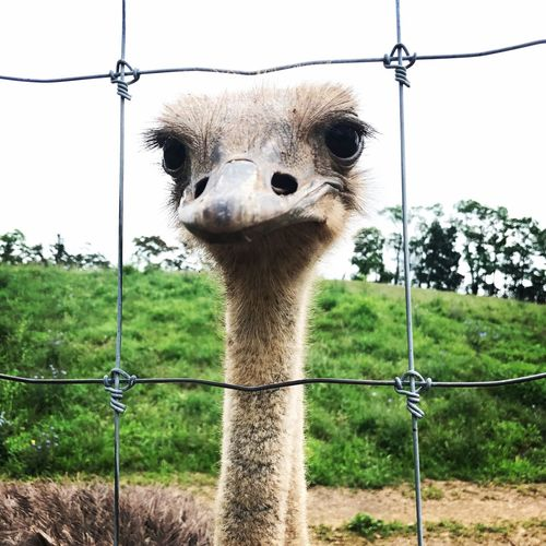 Ostrich Zoo Animals  Safari Animals Lake Tobias First Eyeem Photo