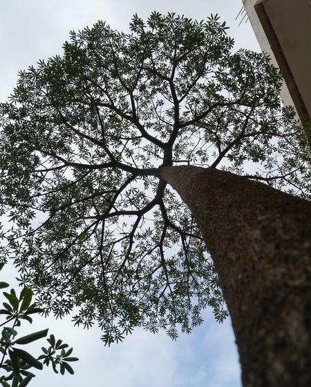 #It is the nature of the strong heart, that like the tree it strives ever upwards when it is most burdened- Philip Sidney #naturephotography #moonsoonmood Trunk Naturephotography Moonsoonmood Nature Beauty In Nature Enviromment Pathway Reachhigh Tree Sky Close-up Leaves Branch Growing Leaf