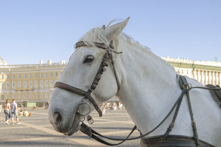 Horse cart in a city
