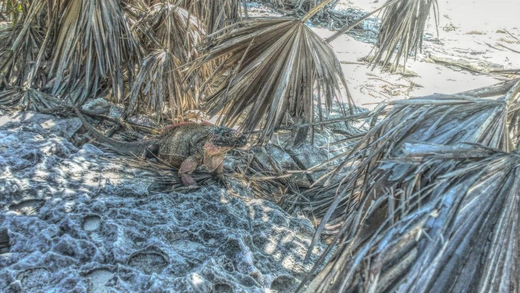 Iguana Island Bahamas Exuma