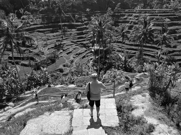 Rear view of man standing on footpath by terraced field