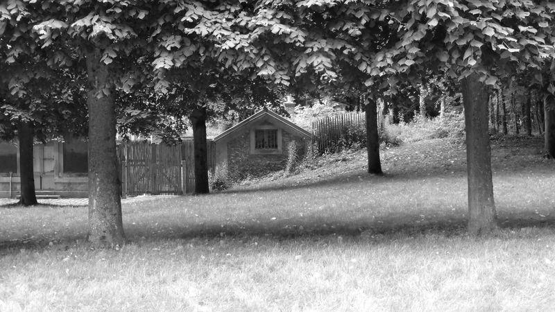 La petite maison du parc de Versailles , Jour Noir Et Blanc Exterieur Nature Beauté De La Nature Scène Rurale Scène Tranquille Paysage Arbre Champ Herbe Vert Batiments Vide Tronc D'arbre Herbeux