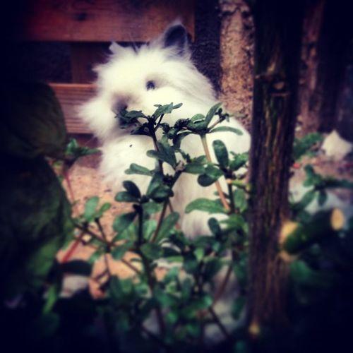 En Teddy sota el Llimoner Cutte Rabbit Animalslove Conill Diesmacos Enfamilia Novacasa NovaVida