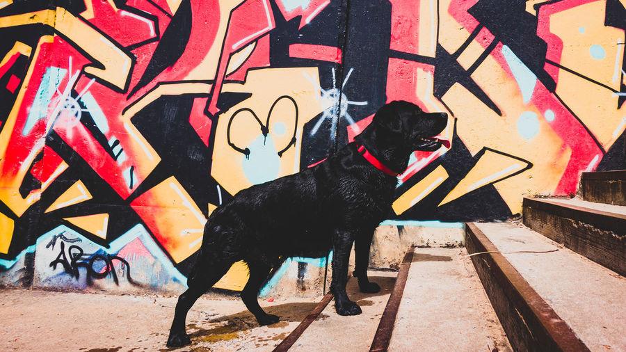 Dog standing on street against graffiti wall