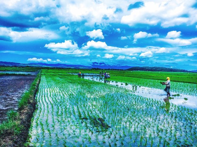 Investing In Quality Of Life Agriculture Farm Field Eyeem Philippines