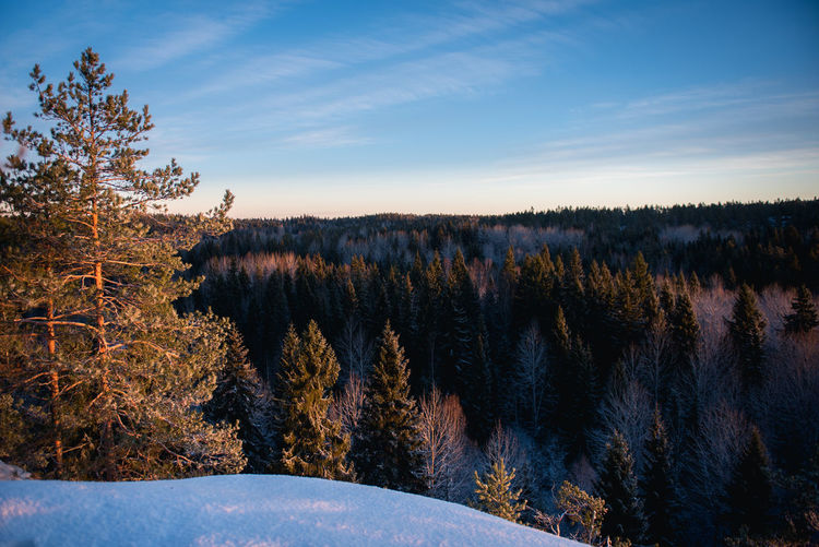 Beauty In Nature Cold Temperature Day Finland Forest Growth Landscape Nature No People Outdoors Pinaceae Pine Tree Pine Woodland Scenics Sky Snow Sunset Tree Wilderness Winter