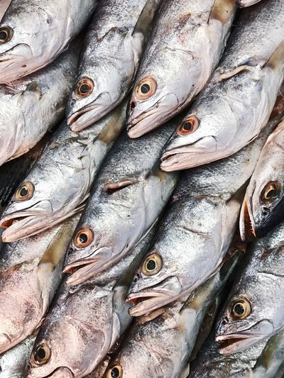 """""""Fish"""" Seafood Freshness Fish Healthy Eating Retail  Close-up Food And Drink Food Market Raw Food Fish Market Market Stall Outdoors Eye Ice Flea Market For Sale Backgrounds No People Farmer's Market Pattern Day IPhoneography Iphone 6 VSCO"""