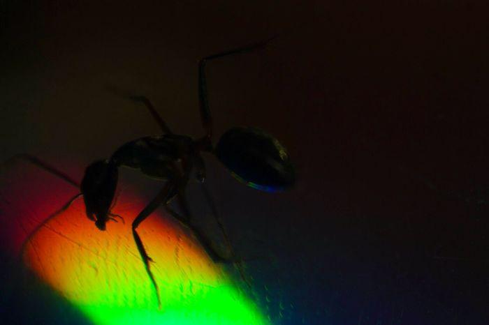 Ant Bully Face Off Trap Escape Artist