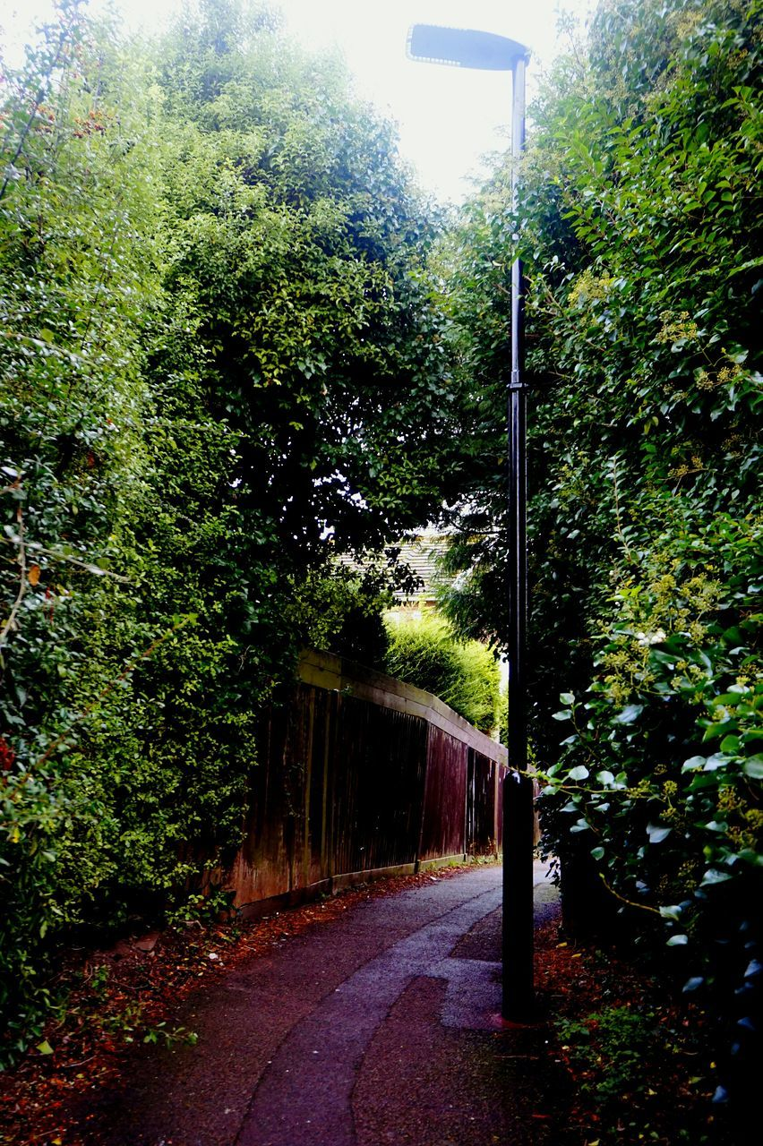 tree, the way forward, road, no people, day, growth, plant, outdoors, nature