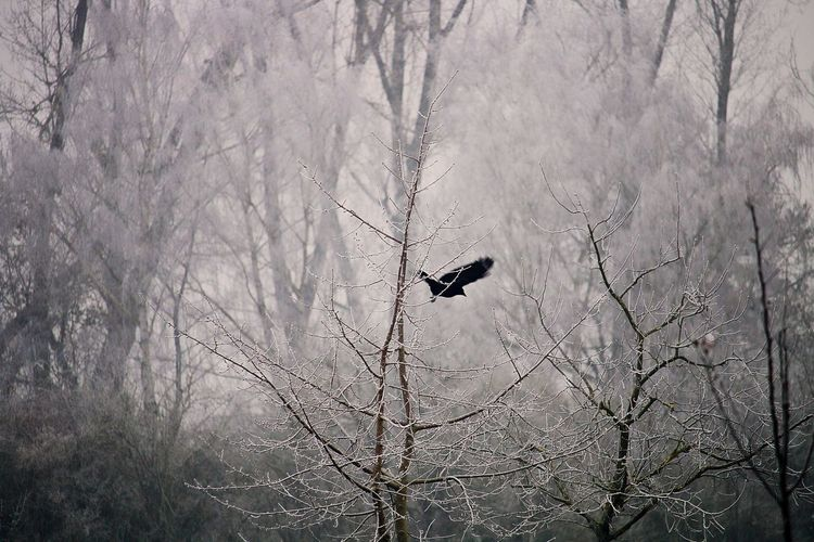 Bird Photography Tree Animal Themes Animals In The Wild Bird Animal Bare Tree Animal Wildlife One Animal Winter Cold Temperature Branch Nature Birds Of EyeEm  Birds🐦⛅ Birds In Flight Mystical Atmosphere Scenics Scenery Atmospheric Mood Nature_collection Cold Days Winter Trees Wintertime EyeEm Nature Lover