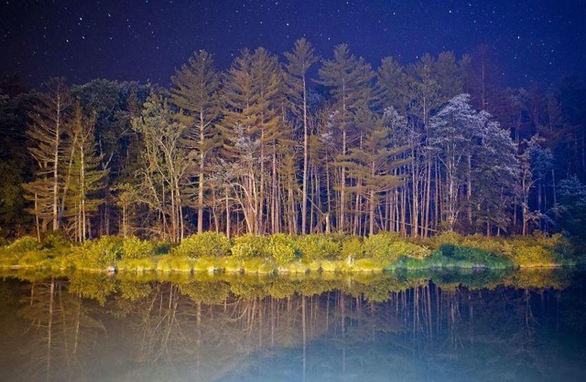 Foret Nature Eau Reflet