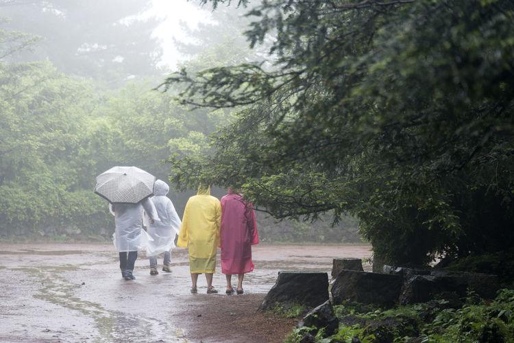 rainy day of Bijarim which is a famous forest in Jeju Island, South Korea Adult Bijarim Day Forest Full Length JEJU ISLAND  Kimono Lifestyles Men Nature Outdoors Pathway People Rain Real People Rear View Sky Togetherness Traditional Clothing Tree Two People Walking Water Women