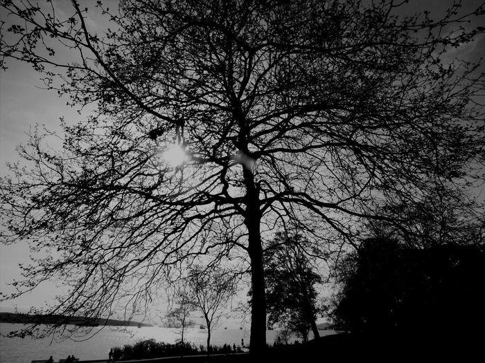 Trees More Tree
