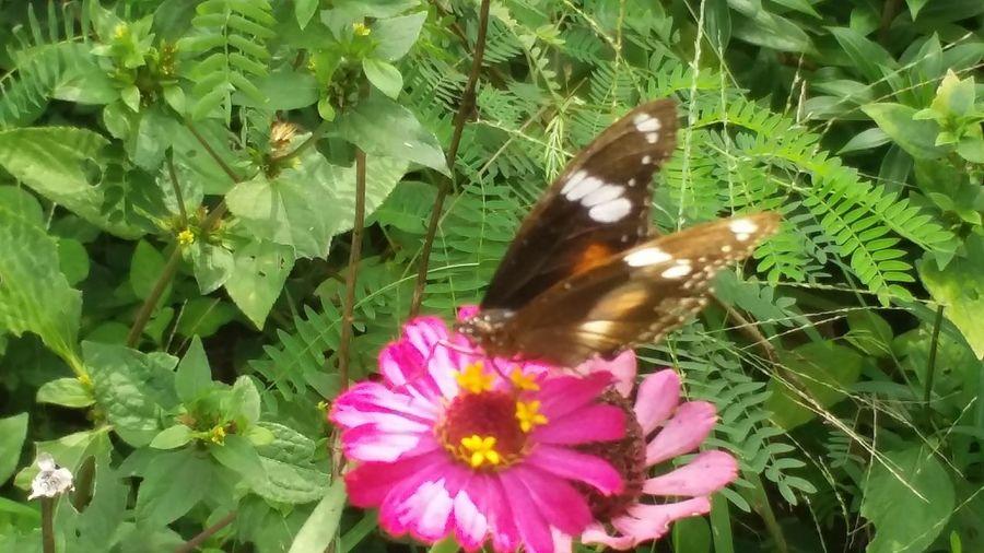 Butterfly On Flower Pink Flower