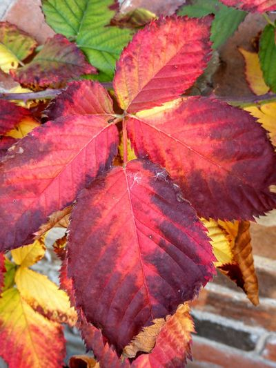 nature paints Shapes And Forms Nature Photography Nature_collection Art is Everywhere Bestoftheday Multi Colored Leaf Change Close-up Leaf Vein Natural Pattern
