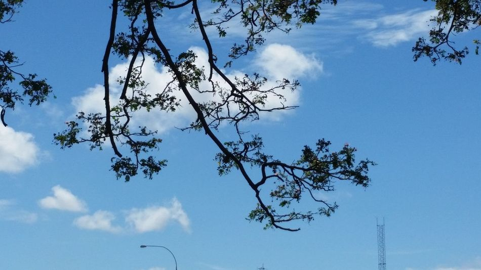 Beauty In Nature Branch Cloud - Sky Day Growth Low Angle View Nature No People Outdoors Sky Tree
