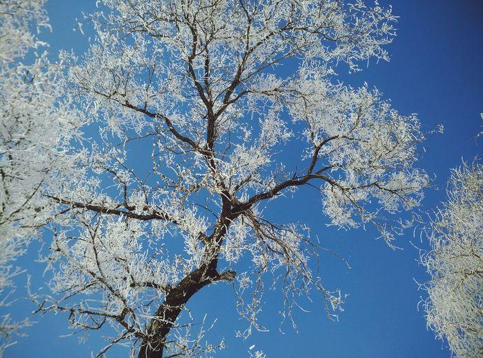 Wusongdao Tree Jilin.China Winterscapes Sky