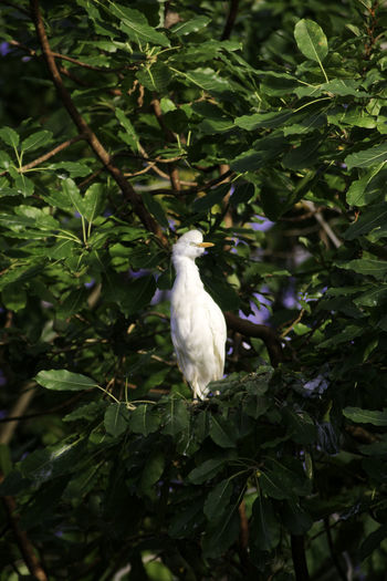 White bird perching on a tree