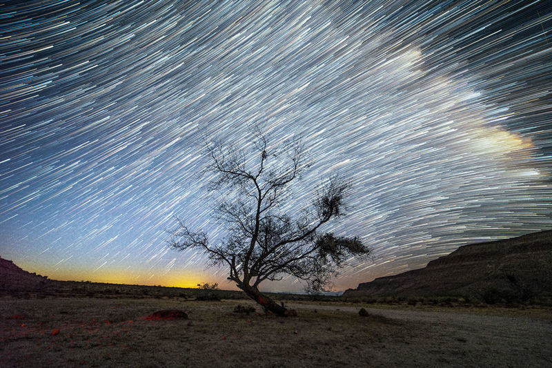 Scenic view of trees on land against sky at night