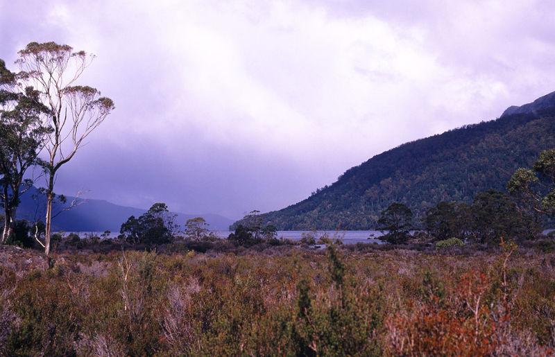 a remote lake in tasmania Australia Footpath Gum Trees Hike Lake Nature Overland Overland Track Tasmania Tassie The Overland Track Walk Walkway