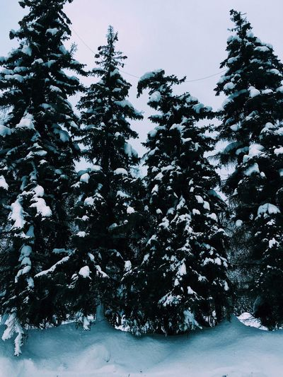 Snow Cold Temperature Winter Tree Nature Beauty In Nature No People Outdoors