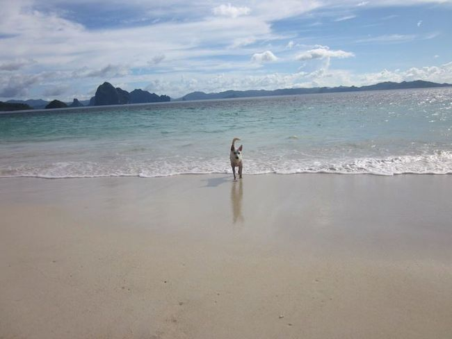 Calmness Adogslife Beachphotography Island Morefuninthephilippines Sand Touristspot Travelmore Waves