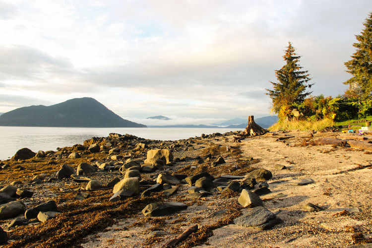 rocky beach in Alaska Nature Rock Adventure Animal Themes Beach Beachphotography Beauty In Nature Cloud - Sky Day Landscape Mammal Mountain Nature No People Outdoors Rock - Object Rocks Scenery Scenics Sea Sky Tranquil Scene Tranquility Water Waterfront