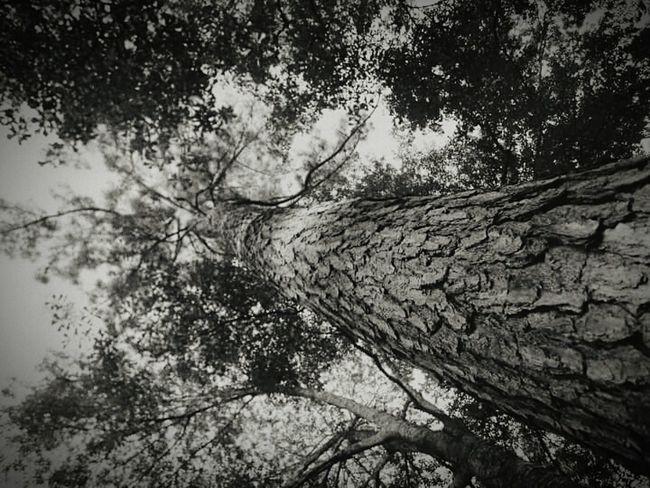 Tree And Sky Treetops