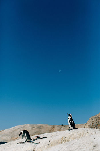 Penguins On Rock Against Blue Sky