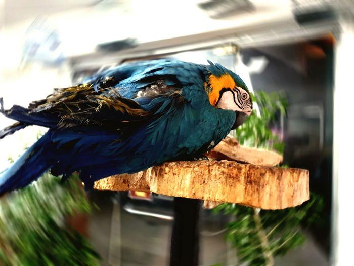 loro Bird
