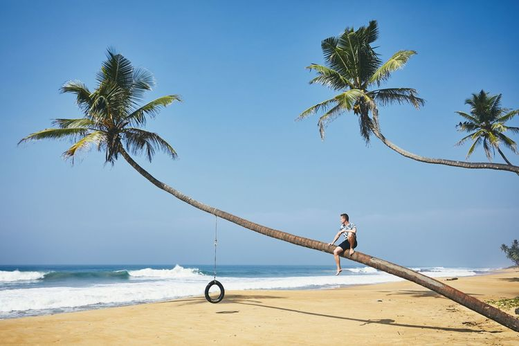 Young man sitting on the palm tree. Relaxation on the sand beach. Sri lanka Palm Tree Sea Sand Beach Sri Lanka Vacations Idyllic Sunlight Clear Sky Travel One Person Enjoyment Man Real People Adventure Freedom Contemplation Relaxing Tropical Climate Water Beauty In Nature Nature Horizon Over Water Carefree Coconut Palm Tree