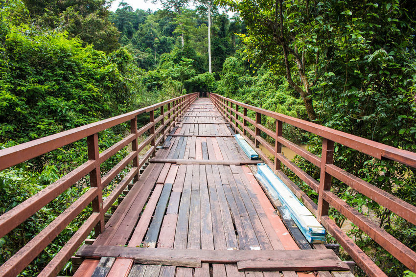 Tree Day Outdoors Wood - Material Railroad Track No People Growth Nature Thailandtravel Travel Thailand_allshots Travel Photography Wood Bridge Tree Jungle Forest Lost In The Landscape Lost Landscape Kaoyai