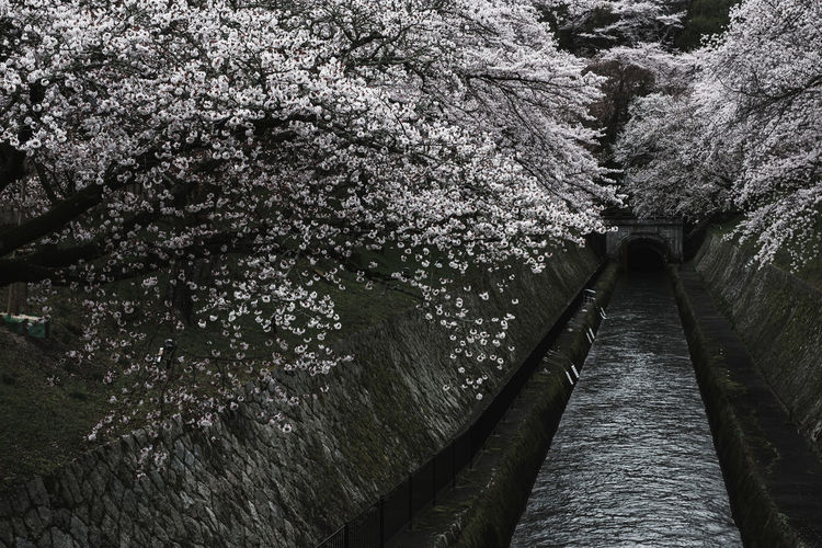 View of cherry blossom from plant