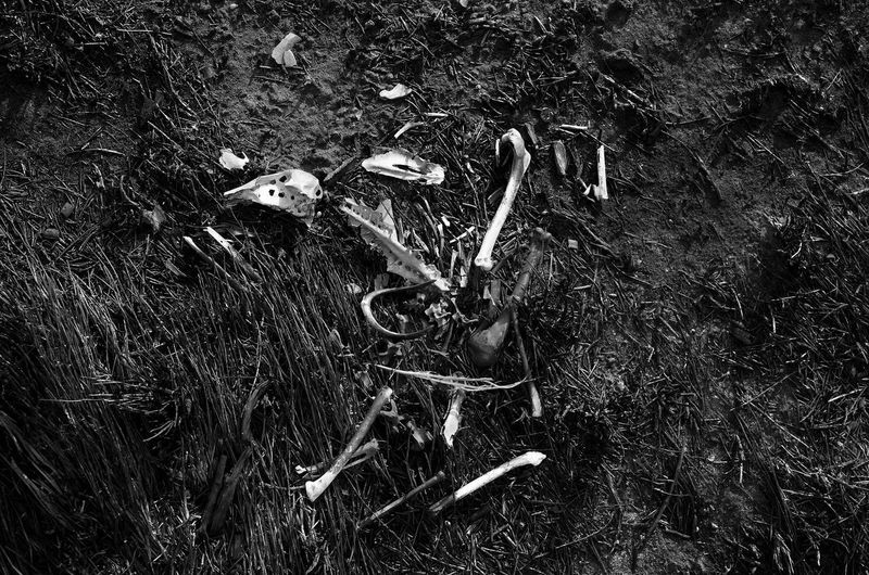 Why the chicken didn't cross the road Chicken Skeleton Death Abandoned Close-up Damaged Day Dead Bird Dirt Environment Environmental Issues Field Forest Grass Growth High Angle View Land Metal Nature No People Outdoors Plant Plant Part Skeletons Tree