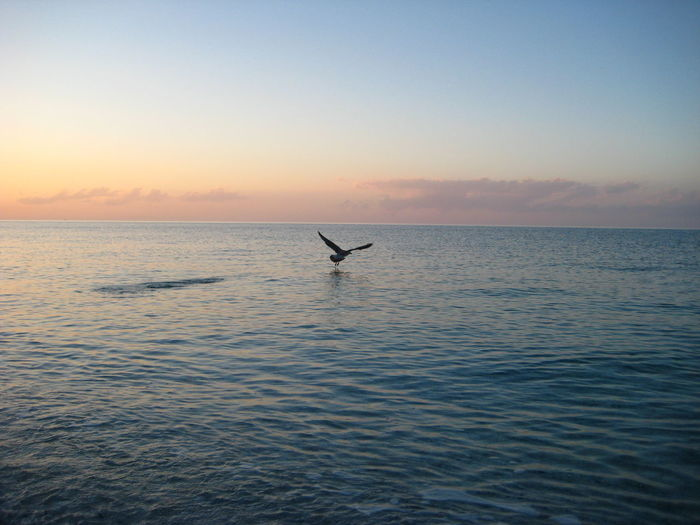 EyeEmNewHere Relief Tranquility Beauty In Nature Horizon Over Water Nature Sea And Sky Seagull Sunset Touch Screen