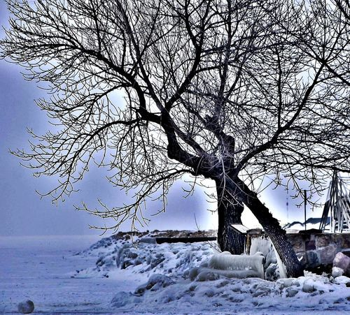 #Winter #balaton #hungary #siofok #sky #hungary Bare Tree Beauty In Nature Cold Temperature Day Landscape Nature Sky Snow Winter