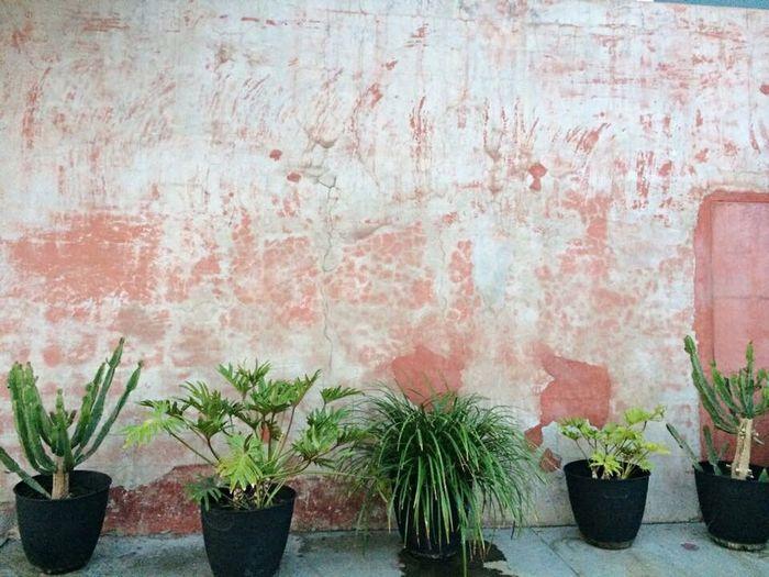 Plants on plaster
